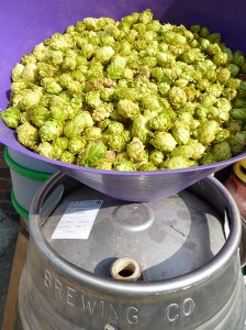 fresh hopped real ale brew